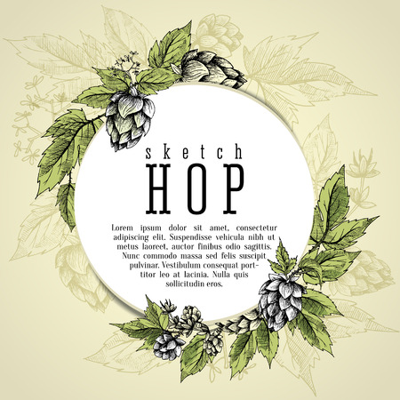 common hop: Beer hops round frame hand drawn hops branches with leaves, cones and hops flowers, color sketch and engraving design hops plants. All element isolated. Common hop or Humulus lupulus branch.