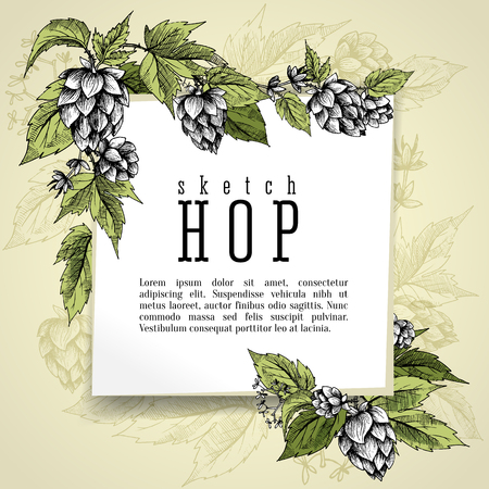 Beer hops square frame hand drawn hops branches with leaves, cones and hops flowers, color sketch and engraving design hops plants. All element isolated. Common hop or Humulus lupulus branch. Vector Illustration