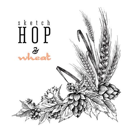 Frumento e birra luppolo ramo con spighe di grano, luppolo foglie e coni. Sketch e design incisione luppolo piante telaio angolare. Tutto elemento isolato.