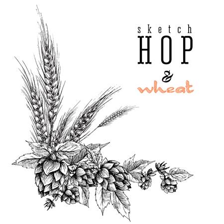 Frumento e birra luppolo ramo con spighe di grano, luppolo foglie e coni. Sketch e design incisione luppolo piante telaio angolare. Tutto elemento isolato. Vettoriali