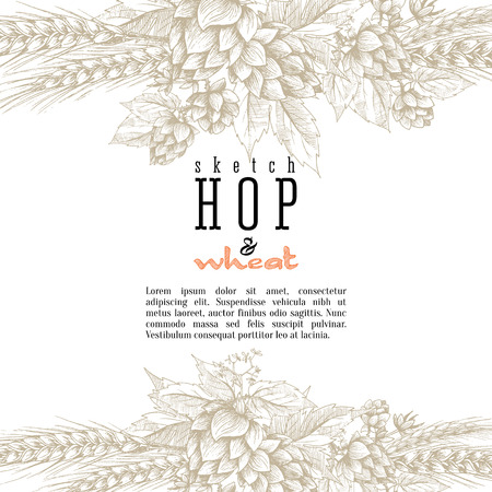 Wheat and beer hops branch with wheat ears, hops leaves and cones vector background. Sketch and engraving design layout, all element isolated.