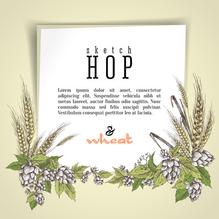 Wheat and beer hops branch with wheat ears, hops leaves and cones vector background. Sketch and engraving design layout hops plants frame. All element isolated.