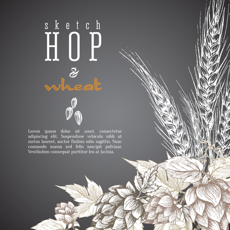 Wheat and beer hops branch with wheat ears, hops leaves and cones vector background. Sketch and engraving design layout hops plants angular frame. All element isolated.