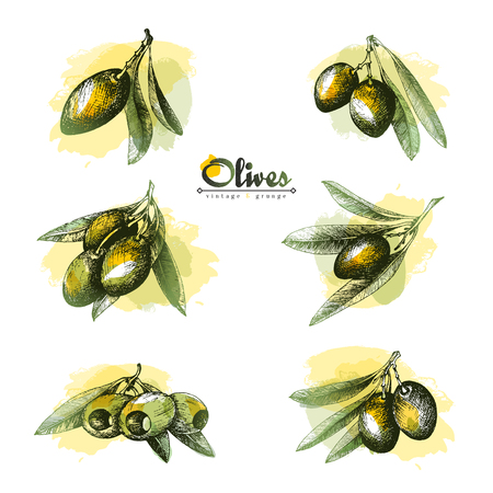 pitted: 6 Olive sketch branches collection isolated illustrations with watercolor spots over white background, olives pitted and with leaves, vector hand drawn retro illustration. Italian cuisine.