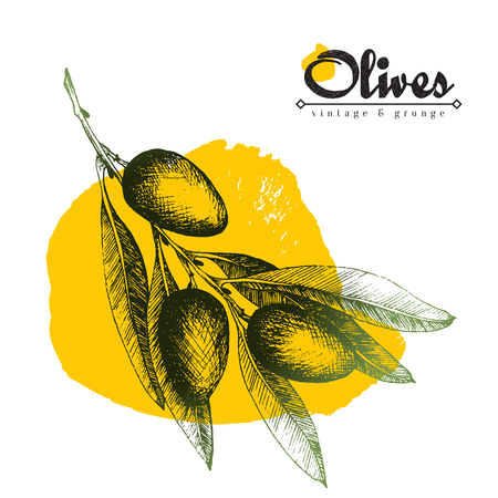 Olive branch vector colourful isolated illustration, sketch hand drawn style with yellow paint spot over white background, olives, leaves, lettering.