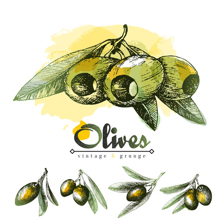 oliva: Pitted olives with leaves sketch vector illustration, small olive branches hand drawn pencil and colorful spot, vintage style elements set of traditional Italian and Greece products.