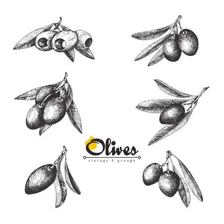 pitted: 6 Olive sketch branches collection isolated illustrations over white background, olives pitted and with leaves, vector hand drawn retro illustration. Italian cuisine.