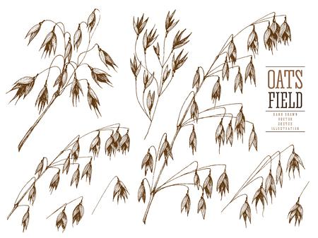 Haver Aartje schets hand getekende vector collectie, graan en stengels geïsoleerde vintage illustratie op een witte achtergrond voor de bakkerij winkel of menu. Cereal thema.