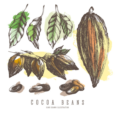 Cocoa pods, colorful collections of whole and branch of cocoa tree, beans, seeds and leaves. Vintage isolated vector elements for design.