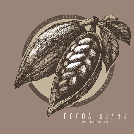 Cocoa pods label design. Sketch vintage vector illustration.