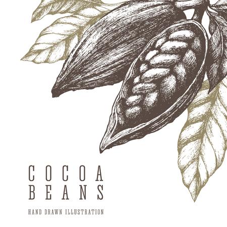 코코아 콩 복고 그림입니다. 벡터 손으로 그린 된 스케치 요소를 디자인합니다. 초콜렛과 과자 성분.