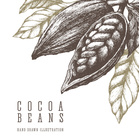Cocoa beans retro illustration. Vector hand drawn sketch elements for design. Chocolate and sweets ingredient. Illustration