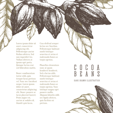 Hand-drawn cocoa beans retro illustration