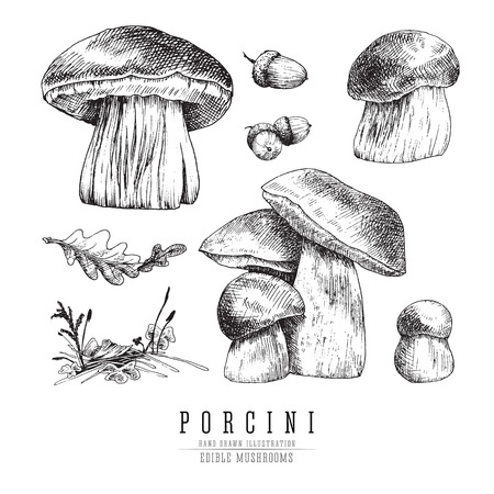 Cep mushrooms vector sketch set, porcini boletus with forest accessories: moss, plants, oak leaf.  Edible mushroom isolated engraving on white background. Ilustração