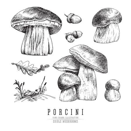 Set di schizzi vettoriali di funghi Cep, funghi porcini con accessori forestali: muschio, piante, foglie di quercia. Incisione isolata funghi commestibili su sfondo bianco. Vettoriali