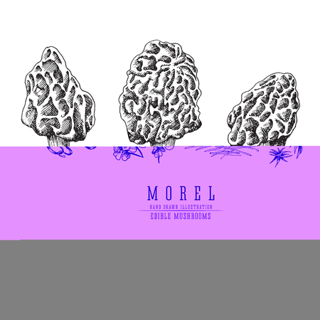 Morel mushrooms vector sketch collection. Edible mushroom isolated engraving on white background.