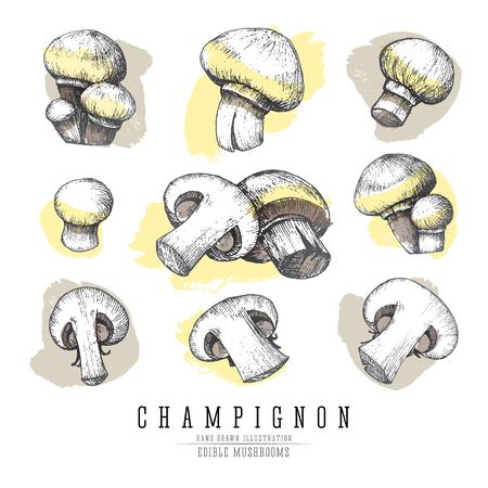 Champignon mushrooms sketch collection.