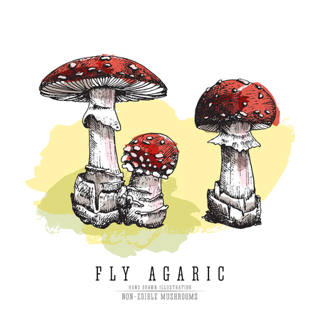 Fly agaric, non-edible poisonous forest mushrooms colored sketch illustration.