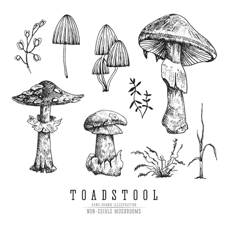 Toadstool and fly agaric, very dangerous non-edible poisonous forest mushrooms sketch vector illustration isolated. Ilustração