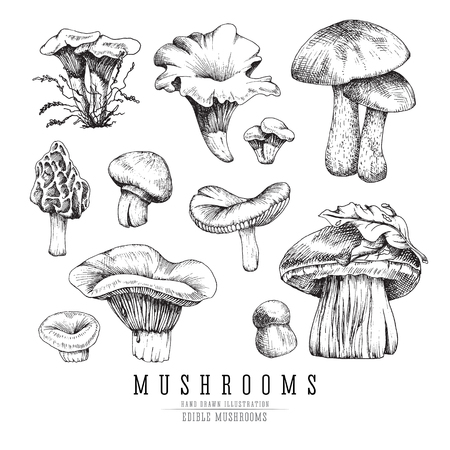 Forest types of mushrooms collection, edible boletus in retro sketch vector style. All elements isolated.