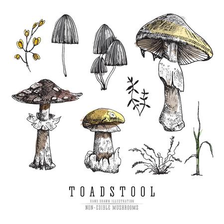 Non-edible poisonous forest mushrooms illustration