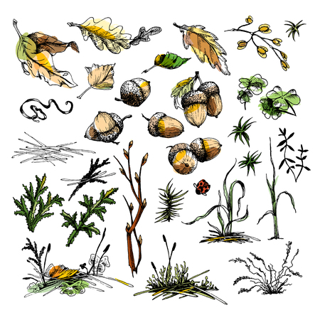 Collection of forest undergrowth elements illustration