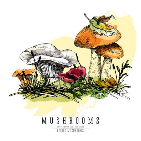 Different types of edible mushroom illustration