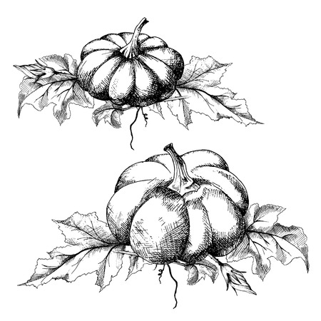 Pumpkin with flowers and leaves, two harvest illustrations set, hand drawn sketch, vector. All objects are isolated. Illustration