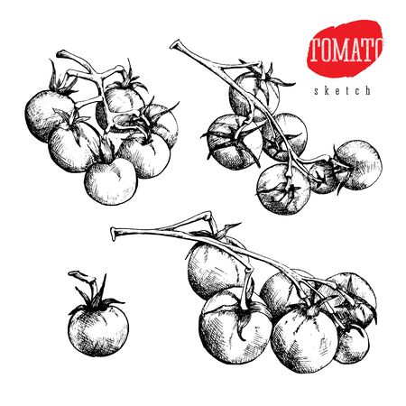 Isolated vector sketch set of a single tomato and tomatoes on a branch Illustration