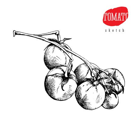 Isolated vector sketch of the tomatoes on a branch