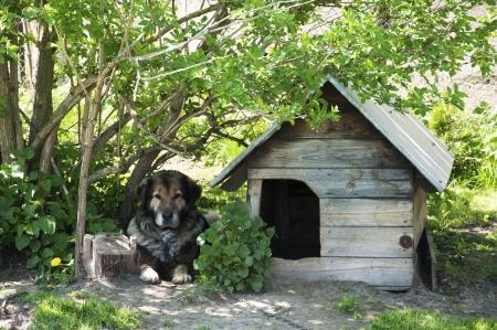 servitude: dog next to his hut