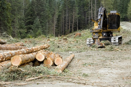Logging Operation photo