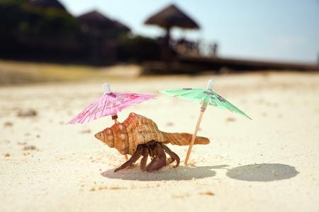 land shell: Hermit Crab Beach Bum Stock Photo