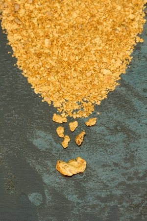 Natural placer gold and nuggets in an old gold pan photo