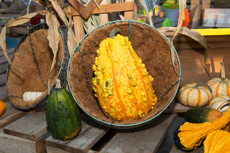 An interesting squash with an assortment of smaller squash