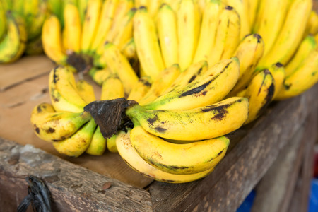 edible plant: Bananas growing on a plantation in the Philippines Stock Photo