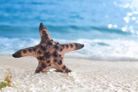 Exotic starfish on a tropical beach