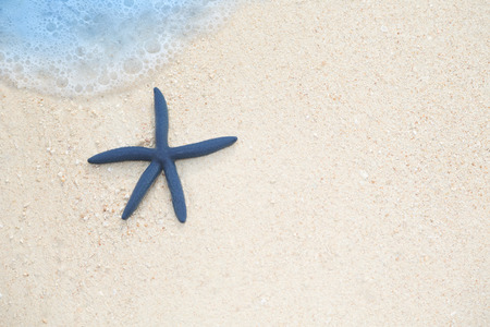 Exotic blue starfish on a tropical beach