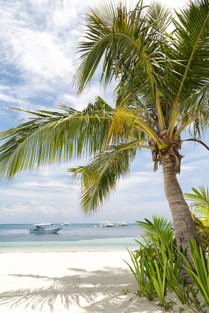 Coconut tree on a tropical white sand beach in the Philippines