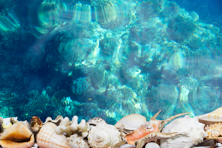 Exotic tropical shells bordering a deep blue tropical reef Stok Fotoğraf - 53825778