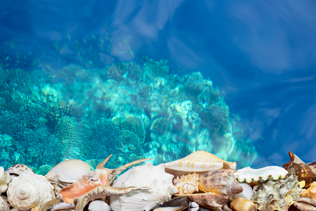 깊은 푸른 열 대 암초를 접경하는 이국적인 열 대 껍질