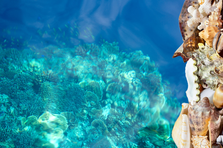 calcium carbonate: Exotic tropical shells bordering a deep blue tropical reef