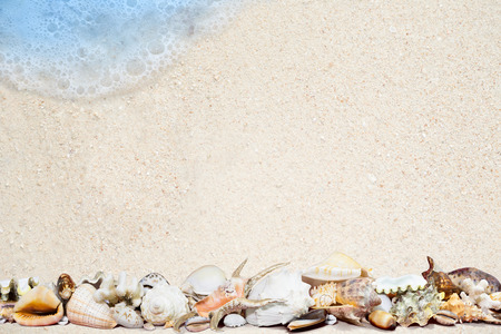 Exotic tropical shells on a white sand beach