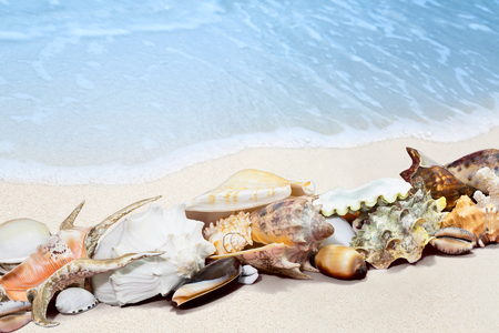 cone shell: Exotic tropical shells on a white sand beach