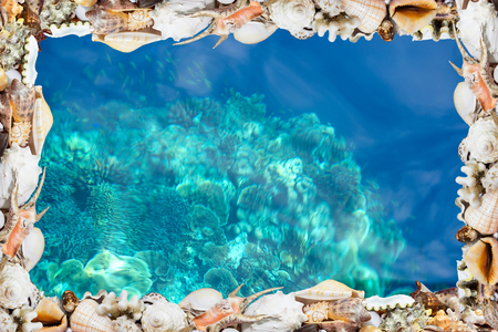 Exotic tropical shells bordering a deep blue tropical reef Stok Fotoğraf - 54177038
