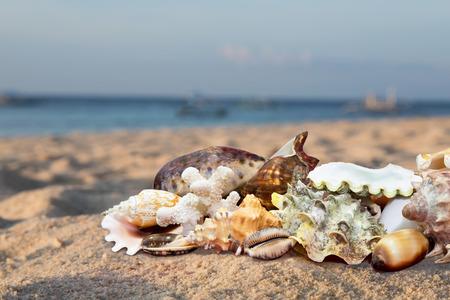 Sunrise on a tropical beach full of exotic seashells