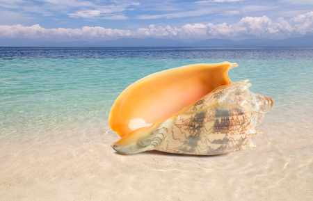 Exotic shell on a tropical beach