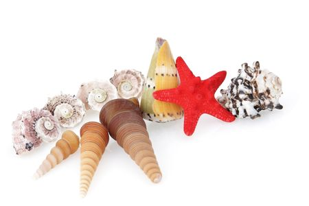 beautiful sea collection, shells and red starfish isolated on white Stock Photo