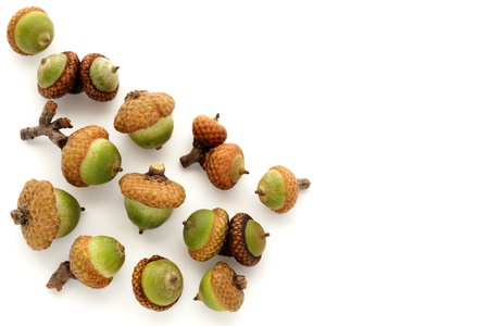 Small group of unripe green acorns on white Stock Photo - 10327617