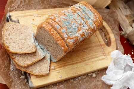 bread mold: Loaf of bread, dirt, germs and mess